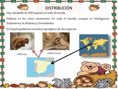 Proyecto ardillas explicación Red Squirrel, Squirrels, Blue Prints, Indian People