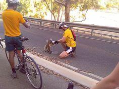 ciclistas param para dar água à um filhote de coala que estava com sede por causa do calor de 40 graus