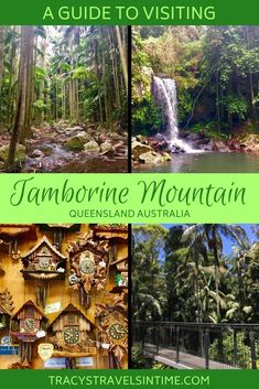 A guide to visiting Tamborine Mountain in the Gold Coast Hinterland Queensland Australlia - find out what to see and do, where to stay and eat and tips to make the best of your visit to the beautiful Mt Tamborine. Australia Tourism, Coast Australia, Visit Australia, Western Australia, South Australia, Mt Tamborine, Tamborine Mountain, Cairns Queensland, Queensland Australia