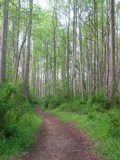 Rivanna Trail - Charlottesville, VA