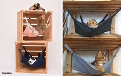 Cat Training With a Clicker Animal Room, Pet Dogs, Dog Cat, Cat Hammock, Cat Shelves, Cat Playground, Dog Rooms, Cat Room, Pet Furniture