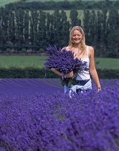 The Allure of Lavender