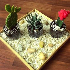 Cactus Time 🌵  #cactus# #cactusgarden# #decoration# #homedecoration# #decor#