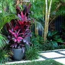 Resultado de imagen para tropical garden ideas