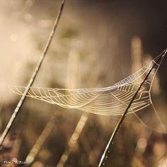 #worlds_beautiful_photos #everything_imaginable #ig_supervizor #bokeh_kings #bokeh_and_blur #amazingphotohunter #ig_great_pics #incredible_shot #ig_exquisite #photowall #kings_insects #luontoonfi #ig_finland #igscandinavia #photografia_naturamember #bestnatureshot #naturehippys #photoarena_nature #ig_naturelovers #love_natura #whywelovenature #heart_imprint #global_ladies