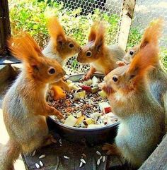 Find images and videos about animal, cute animals and squirrel on We Heart It - the app to get lost in what you love. Animals And Pets, Baby Animals, Funny Animals, Cute Animals, Wild Animals, Animals Images, Cute Creatures, Beautiful Creatures, Animals Beautiful