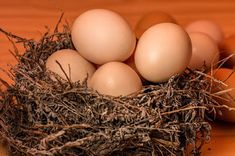 Why We Should Eat Healthy Organic Eggs and How Raising Chickens for Healthy Eggs Lava, Balanced Diet Chart, Selling Eggs, Food Business Ideas, Health Benefits Of Eggs, Organic Eggs, Low Carbohydrate Diet, Home Remedies For Hair, Spirulina