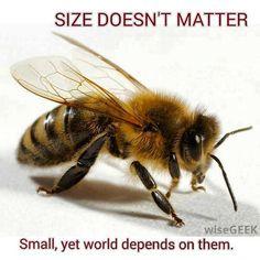 La taille importe peu ! Petites, mais le monde dépend d'elles.