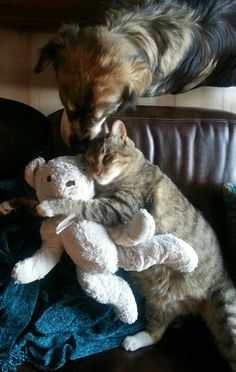 Don't even think about touching the teddy bear, dog!!!!