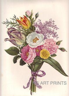Vintage Flower Print, Large Rose Botanical Print, Oversized Botanical Wall Art, Redoute Style Print, John Henry Hopkins Wall Hanging