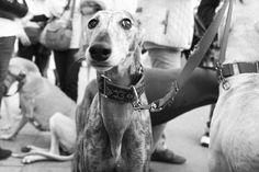 No al maltrato animal!, via Flickr.