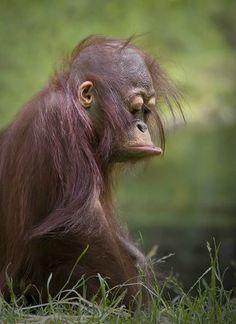 Verdrietige aap