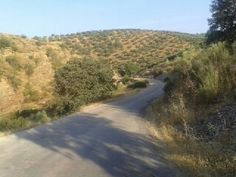 Vía Anibal