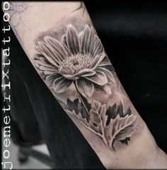 Black and grey gerbera.