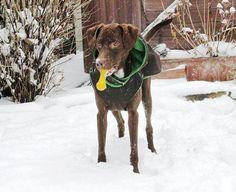 Hood - Detachable hood - Addition to PepperPetwear Coats Dog Coats, Warm Coat, Dog Stuff, Your Dog, Pepper, Labrador Retriever, Pitbulls, Raincoat, Dogs