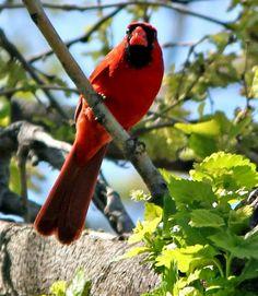 Melodious Birds...