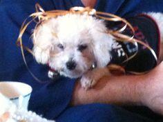 Cutest darn dog I ever owned
