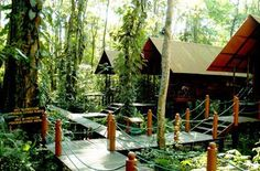 Evergreen Jungle Bungalows and Lodge - Ecological Accommodations, Tortuguero, Caribbean, Costa Rica - Tortuguero National Park