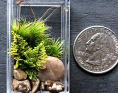 Ammonite Fossil Terrarium Snail Shell Prehistoric by DoodleBirdie
