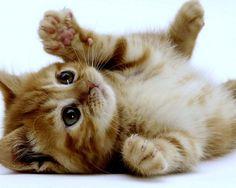 1280x1024 Super Cute Kitten Desktop Pc And Mac Wallpaper