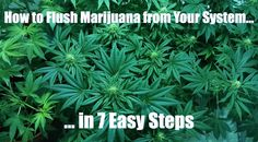 How to Flush Marijuana From Your System in 7 Simple Steps