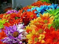 Garden Beautiful Flowers | Relaxing music HD - YouTube