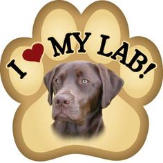 Google Image Result for http://gottoast.com/shop/images/ai_chocolate_lab.jpg