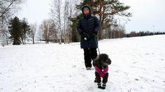 Koirat vaikuttavat myönteisesti suomalaisten kansanterveyteen, sanoo liikuntaopiston rehtori Vesa Martikkala. Koirat vievät omistajat lenkkipoluille ja reipasta kävelyä voi kertyä vuosittain tuhansia kilometrejä.
