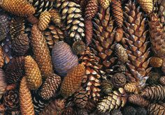 Northern California Style: Why I Heart Autumn . California Style, Northern California, Seed Pods, Earth Tones, Pine Cones, Autumn Leaves, Autumn Fall, Fallen Leaves, Fall Harvest