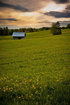 Jämtland, Meadow Meet by peter.lubeck, via Flickr