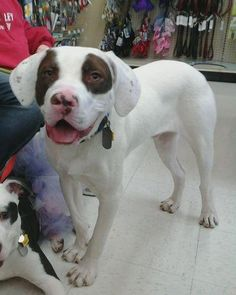 Vegas, mixed breed; Homeless in Ohio.  What a real cutie, love the markings around the eyes!