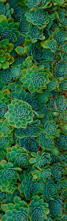 ♥ Succulents~ I Have Managed To Grow A Ton Of These the Past Two Years~ Kimberly Stanley
