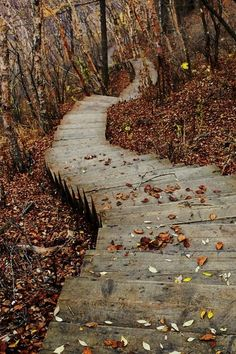 Autumn leaves floating down the forest path along the cliff Beautiful Places, Beautiful Pictures, Seasons Of The Year, Walk In The Woods, All Nature, Stairway To Heaven, Pathways, Stairways, The Great Outdoors