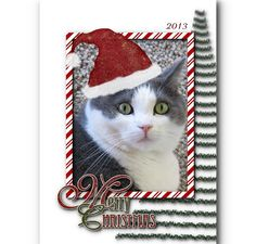 Oh So Cute - Merry Christmas photo your pet dog cat in Santa by TheLaughingPet,