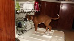 He wants to help with the dishes. Lol