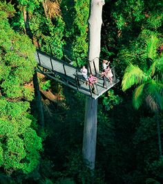 Tamborine Mountain Rainforest Skywalk  A 300m-long elevated walkway which allows visitors to explore the middle and upper reaches of the rainforest canopy. At its lowest points the walkway skirts Cedar Creek, rockpools and a butterfly lookout and ascends to the Cantilever - a 40m span hovering 30m above the valley below, providing awesome views.