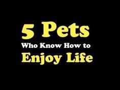 ▶ Pets Enjoying Life - YouTube