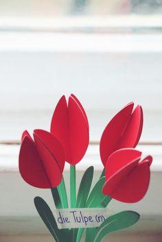 die Tulpe - tulip