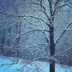 #burlington #vermont #backyard #snow