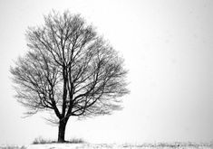 Photography For Sale | Black and White Art, Fine Art, Nature Photography, Alone 16X24 Wall Mount, Wall Hanging, Landscape, Lone Tree, Ready to Hang | ArtsyHome