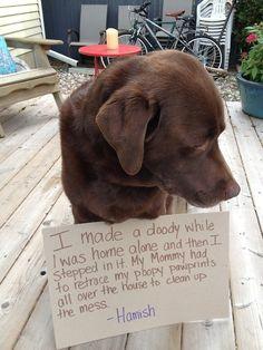 dog shaming | 100 Best Dog Shaming Moments photo Eavie Porter's photos - Buzznet