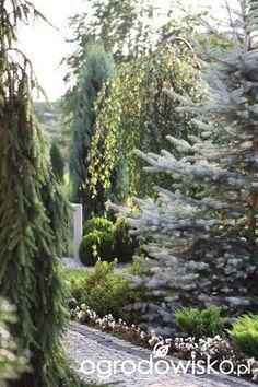 Ogród dominiki