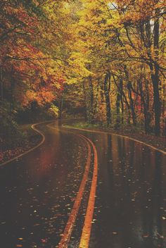 of Outstanding Photos from Master Photographers Autumn Rain. My goodness! Can this scenery get anymore beautiful? My goodness! Can this scenery get anymore beautiful? Autumn Rain, Autumn Leaves, Fall Trees, Autumn Cozy, Beautiful Pictures, Beautiful Places, Beautiful Roads, Beautiful Scenery, Wonderful Places