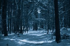 moonlight on snow - Google Search