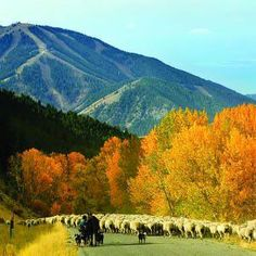 Sun Valley, ID | See Sun Valley in the AAA Idaho, Montana & Wyoming TourBook guide | originally pinned by Michele Ruiz | www.aaa.com/travel