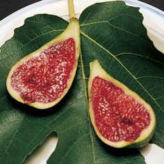 Figs from One Green World-- Stella™