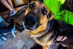 #dog #dogsofinstagram #dogs #instadog #dogstagram #doglover #dogoftheday #ilovemydog #doggy #lovedogs #instagramdogs #frenchbulldog #bulldog #doglovers #dogsofig #doglife #mydog #instadogs #rescuedog #cutedog #dogsitting #doglove #doggie #dogslife #doggo #dogsofinsta #happydog #lovemydog #dogsofinstaworld #dogscorner