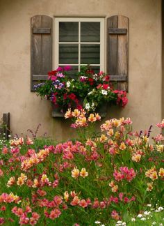 Shutters - Very colorful flower box. Window shutters small change big difference. Now what color and style?