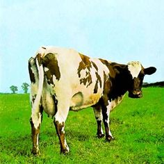Pink Floyd: 'Atom Heart Mother' - Every Pink Floyd cover is brilliant, but the one from 1970 of a cow – Lulubelle III, is one of Storm Thorgerson's finest for the band. It's simultaneously hilarious but perfect. Thorgerson describes it as a 'cow how a cow should be', and like most of the album is totally irrelevant to anything else.