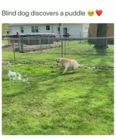 Cute Animal Memes, Animal Jokes, Cute Animal Videos, Funny Animal Pictures, Funny Videos Of Animals, Cute Funny Dogs, Cute Funny Animals, Chien Golden Retriever, Cute Dogs And Puppies